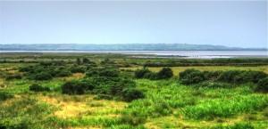 Padura (Marsh)