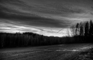 Urkidia eta landa zuri-beltz (Birch forest and field B&W)
