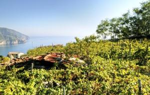 Mahatsondo landa (Vine plantation)