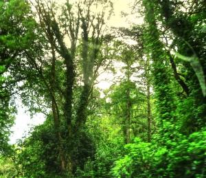 Basoa, detailea (Forest, detail)