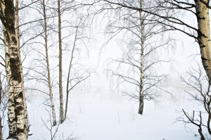 Urkiak lanbroan (Birches in the fog)