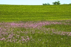 Zelai loretsua (Field with flowers)