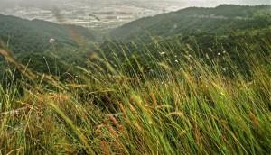 Belarrak eta haizea (Grass and wind)
