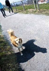Txakurra (dog)