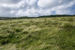 Dartmoor3