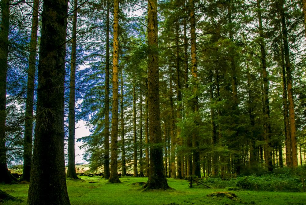 Dartmoor6