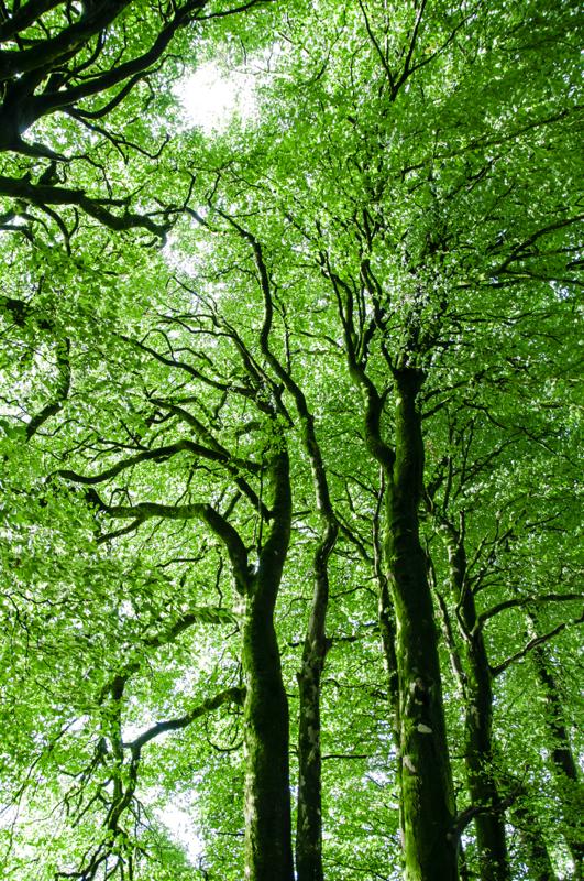 Dartmoor7