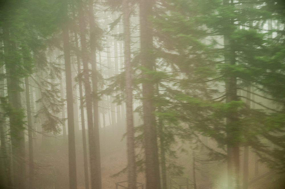 Pinudi bat lanbro artean (A misty pine forest)