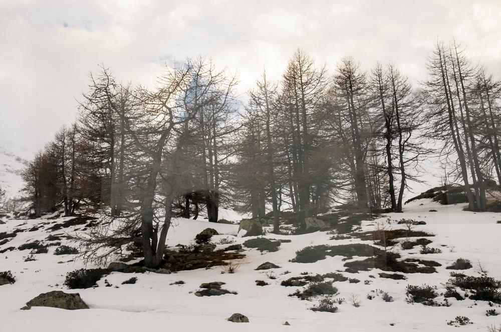 Baso elurtua (Snowy forest)