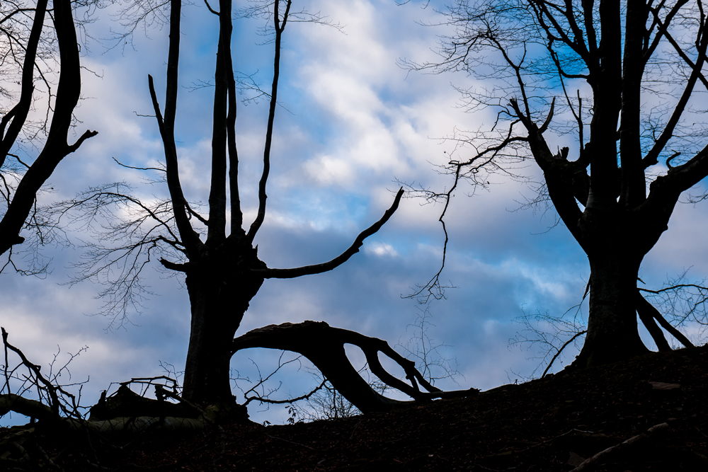 Adar apurtua (Broken branch)